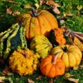 Unique Thanksgiving Marketing Ideas for Agents